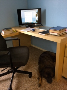 My at-home workspace, complete with furry dissertation buddy.