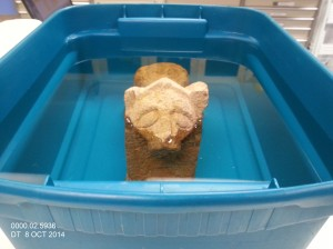 Limestone lion during desalination treatment