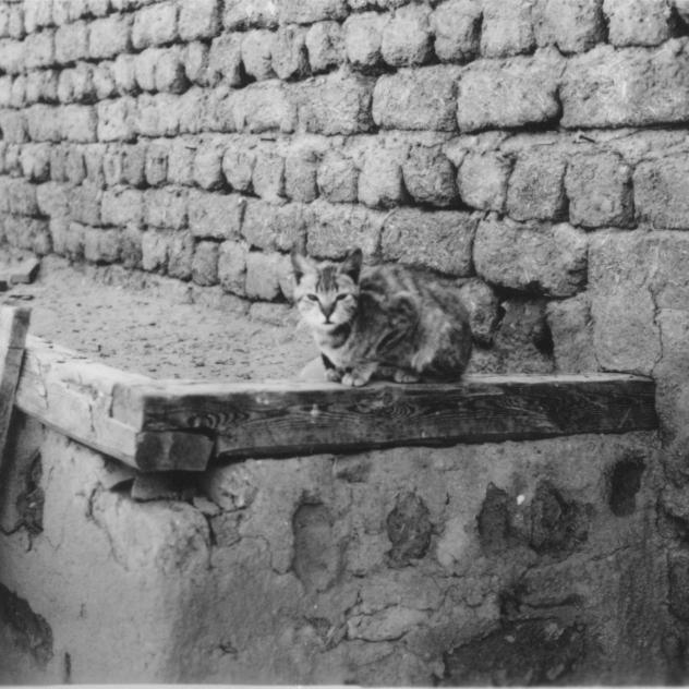 460: Topsy (cat)