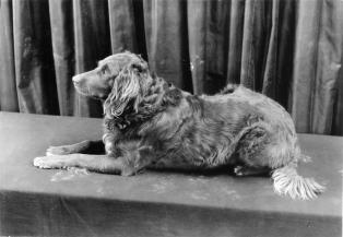 5.3738: Gyp (dog)