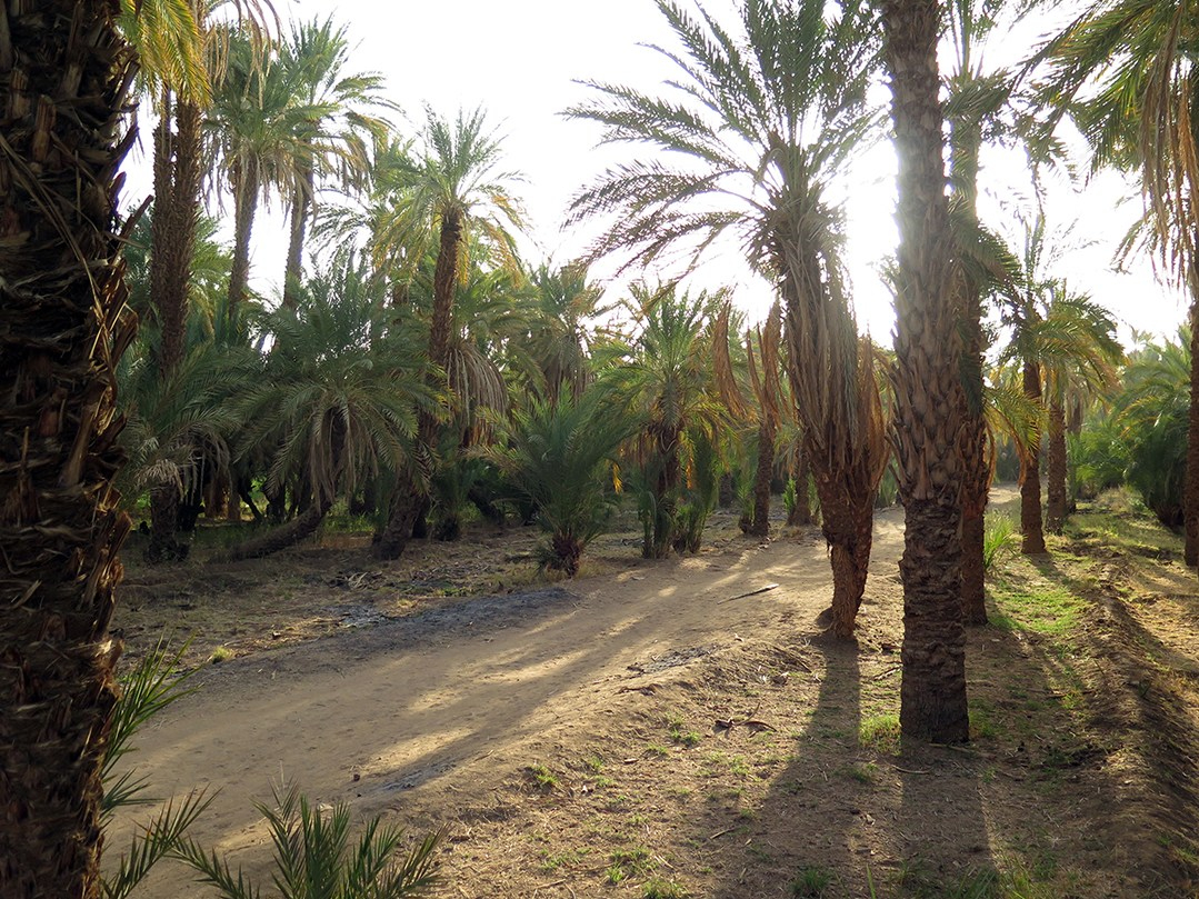 4_Palm groves