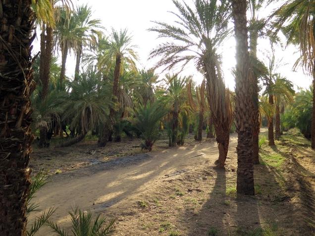 4_Palm groves