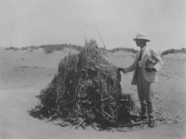 """Image KS175_02: April 27, 1920; George R. Swain; Dimay trip. """"Dr. Askren standing by clump of old reeds in the sand, not far from the lake, as we started for Dimay."""""""