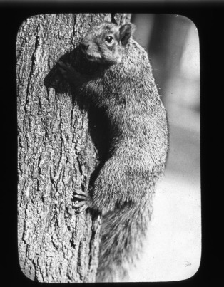 Animal photography by George Swain, possibly on Ann Arbor campus.