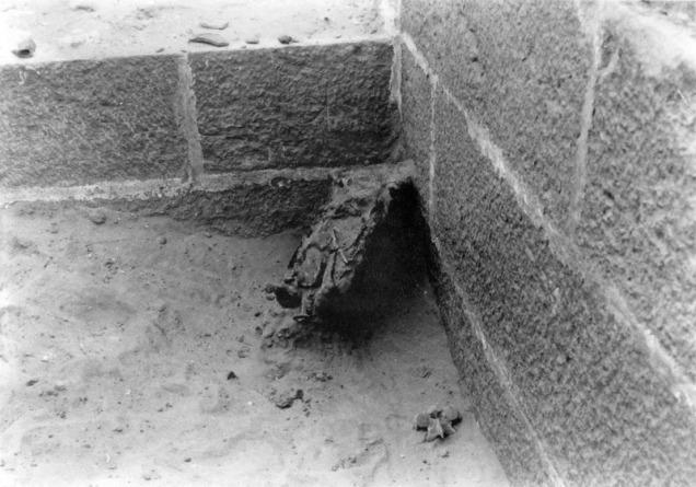 photo of a crocodile mummy in a corner