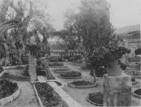 Jerusalem. Some of the formal flower beds in the garden of Gethsemane. KS129.02.