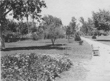 Cairo, Egypt. Flower beds, lawns, trees, shrubbery, on Gezireh island. KS159.12.