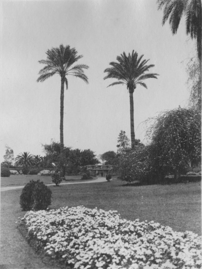 Cairo, Egypt. Flower bed in foreground, looking toward two palms with path and bridge below. KS160.05.