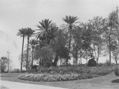 Cairo, Egypt. Flower bed with palm trees beyond, Gezireh island. KS160.10.