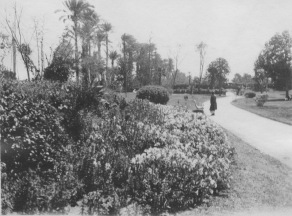 Cairo, Egypt. Flower beds and walk at Gezireh island. KS160.12.