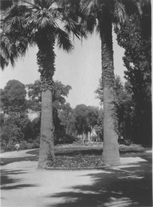 Athens, Greece. Palace Gardens. Flower beds, two palm trees, other trees and shrubbery beyond. KS210.04.